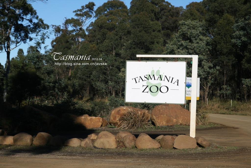 沿山徒步寻找袋熊足迹,在野生动物园观看塔斯马尼亚恶魔(袋獾)或在