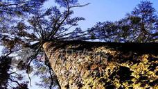 金秀银杉森林公园