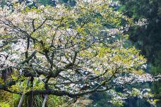 阿里山国家风景区-嘉义-C_image